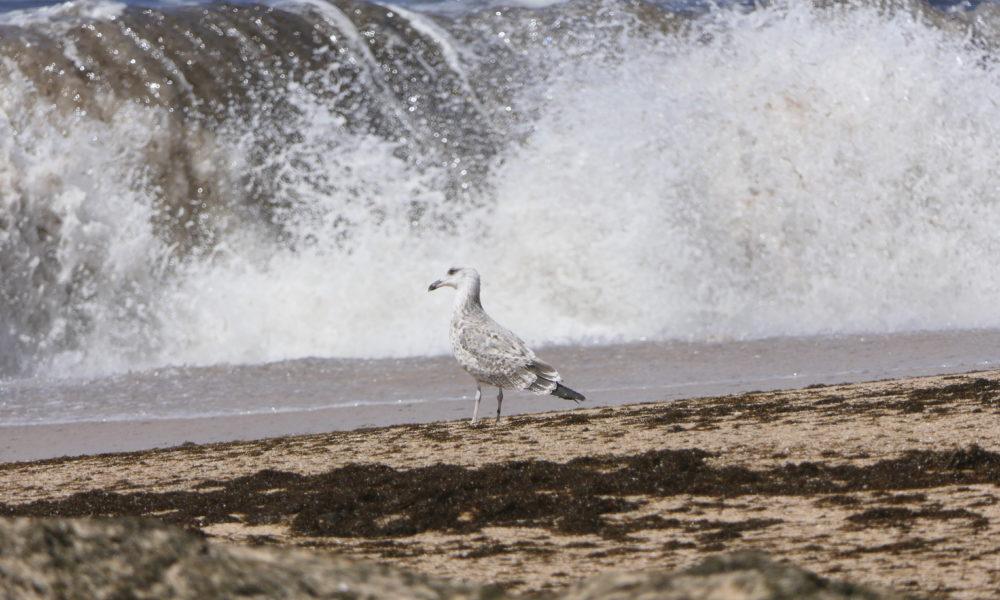Bird on beach in Portugal